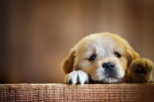 puppies wallpapers 2560x1600 for tablet