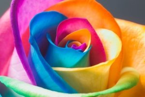 new rainbow flower wallpapers 1920x1200 for pc