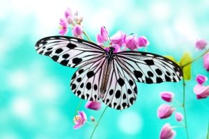 wallpapers butterflies 2560x1600 for android 4.0