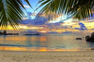 widescreen palm tree desktop wallpapers 2880x1800 for iPad