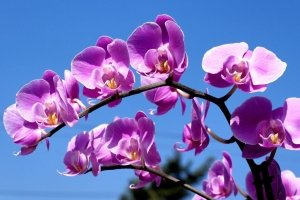 cool purple orchid wallpapers 1920x1200 for iphone 5