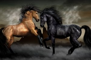 wallpapers horses 2560x1600 for iphone